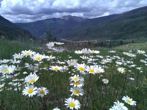 Wildflowers along Vail Pass time trial route