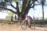 Tree spectator