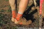 Well-dressed feet